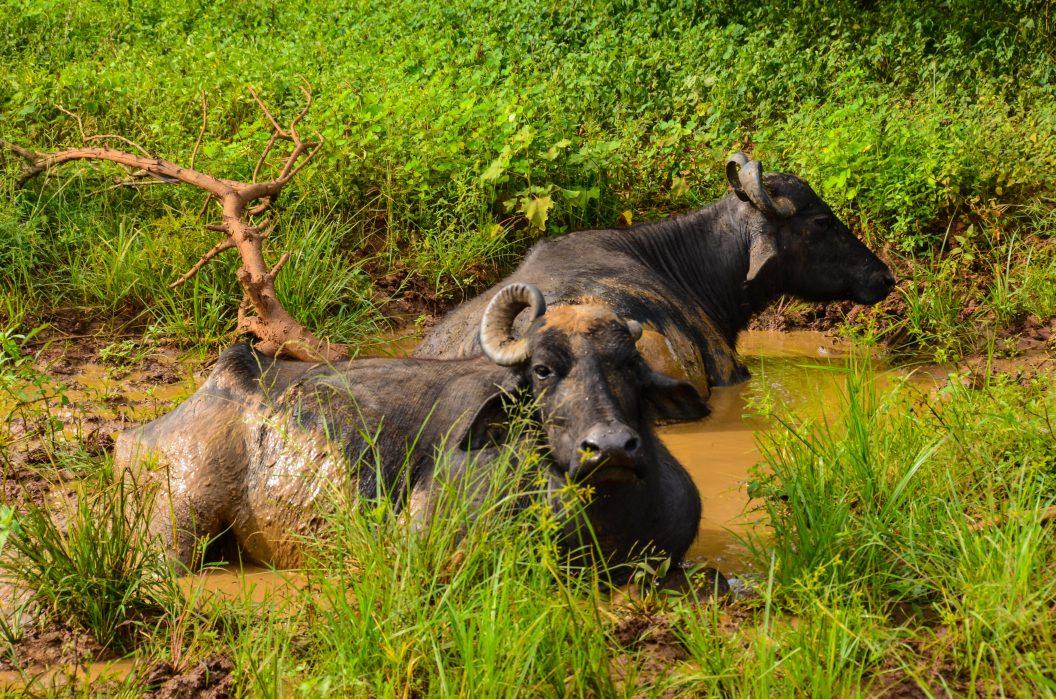 009 – Sri Lanka – Elefanten noch vor dem Neujahres-Frühstück