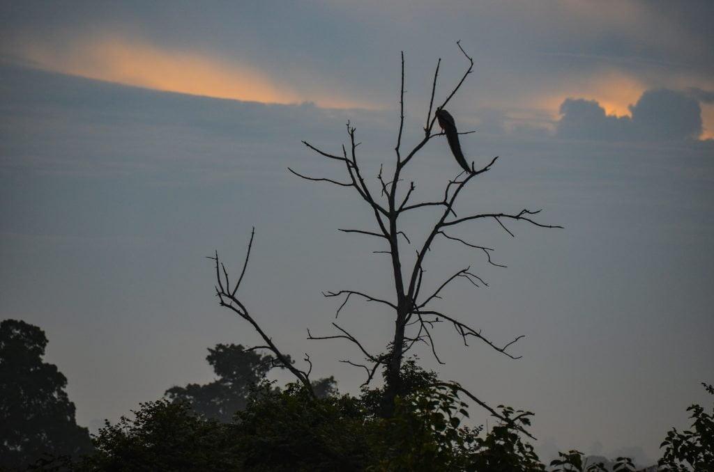 Leben pur! Unterwegs. Sri Lanka