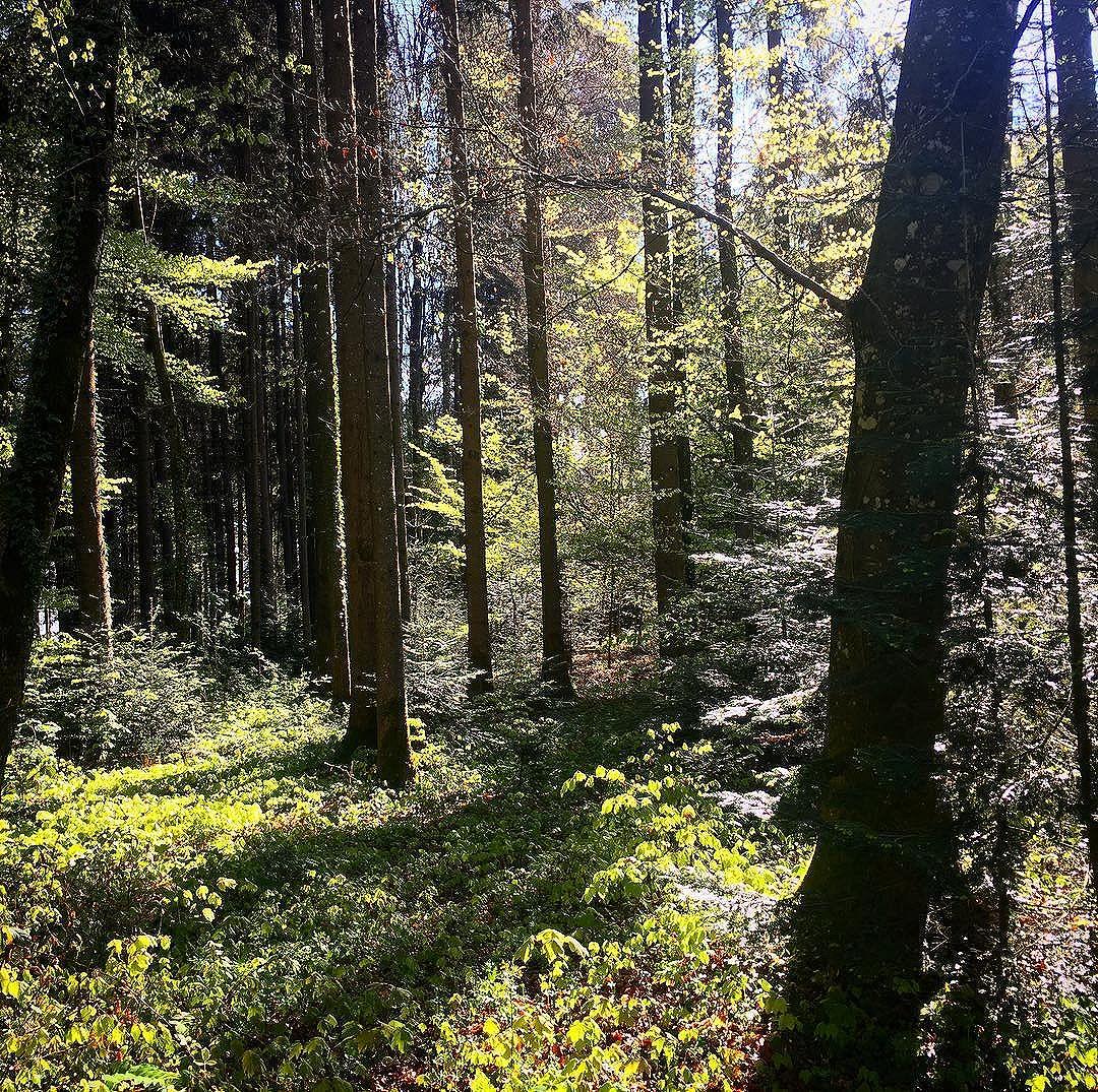 Guten Morgen Und Liebe Gruesse Aus Dem Wald Ich Nehme