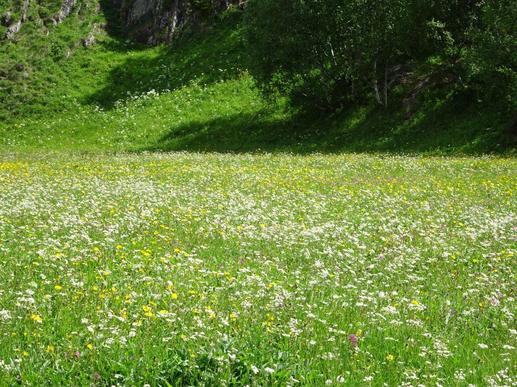 039 – Mein Abenteuer Alpenüberquerung – Tschüss Wallis und immer der Rhône (oder dem Rotten) entlang zur Quelle