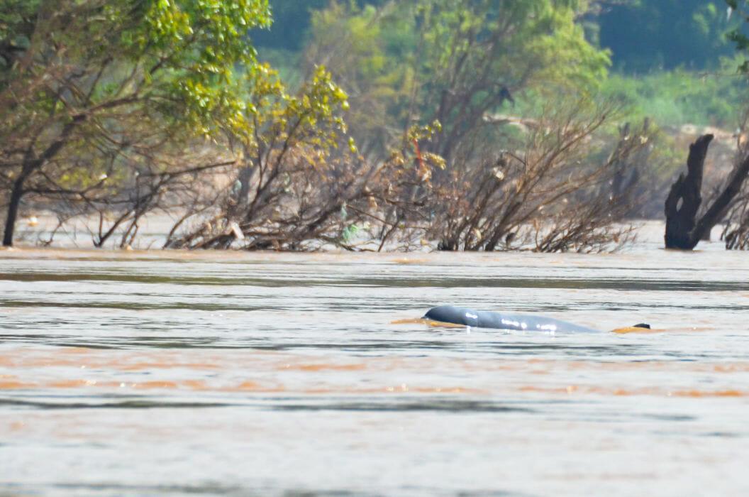 084 – Abenteuer Laos – Die Reise zu den Irawadi-Delphinen